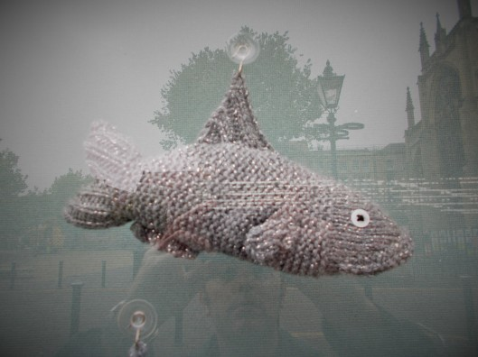 A close up of one of the Knitted Cod and the reflection of the author.